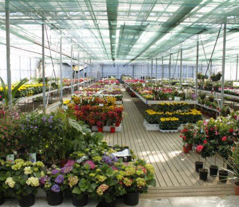Printtimedia on Viherpeukaloiden puutarhamyymälälle tärkein mainontakanava